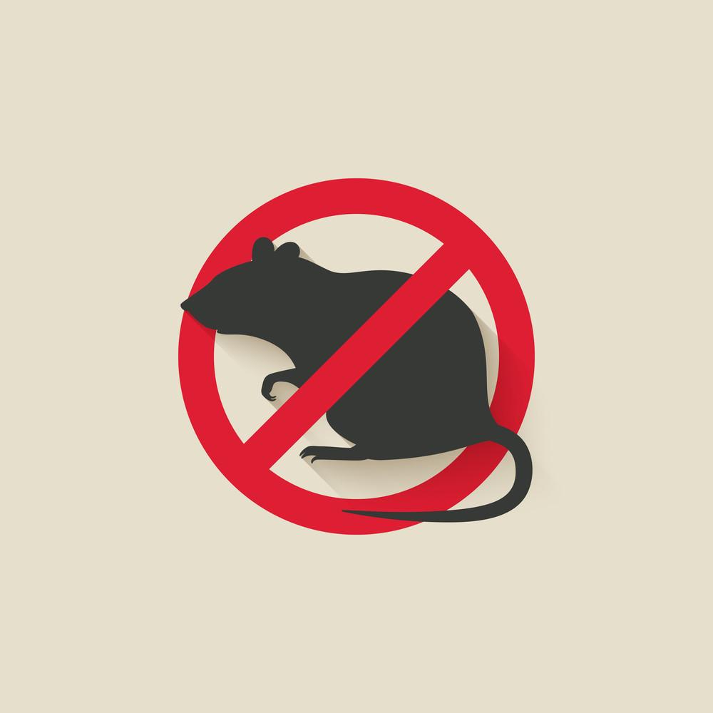 No rats image